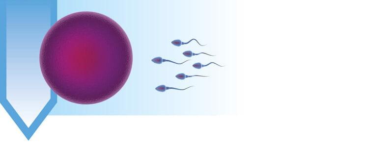 3 months before conception – sperm & egg development